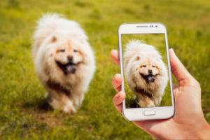 Pet Surveillance2